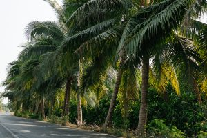 coconut-story-8