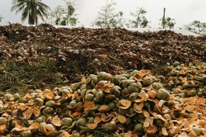 coconut-story-10